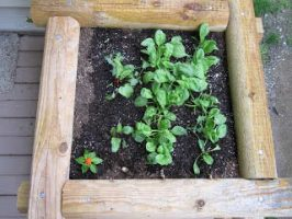 Wooden Box Garden